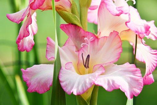 Flower, Pink, Green, Spring, Nature, Zen, Plants
