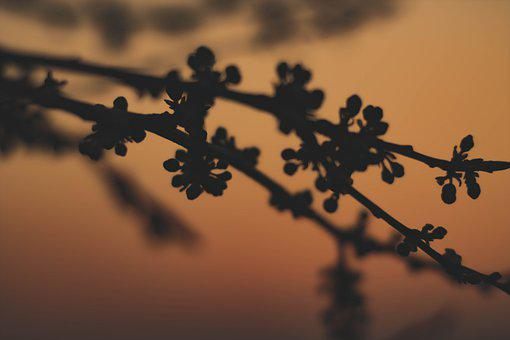 Branch, Tree, Spring, Nature, Branches, Sunset