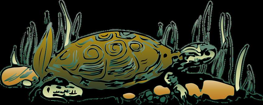 Tortoise, Reptile, Animal, Turtle