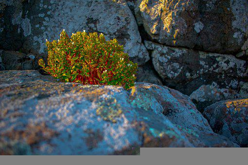 Natural, Beauty, Light, Outdoor, Street, Forest, Stone