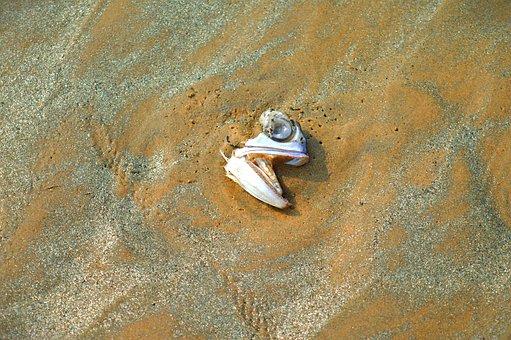 West Bengal, Digha, Beach, India, Sea, Fish, Water