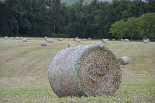 Harvest, Hay Bales, Pet Food, Food, Hay, Agriculture