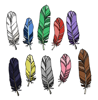Feathers, Feather, Bird, Peacock, Nature, Animal