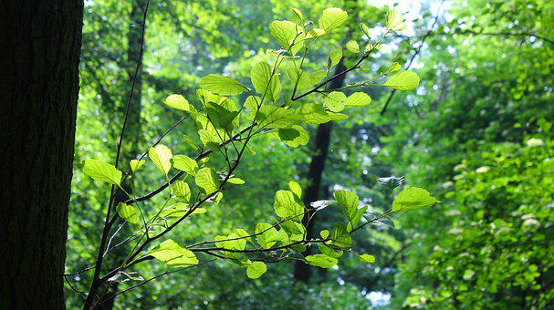Nature, Plants, Foliage, Young, Spring, Twigs, Forest