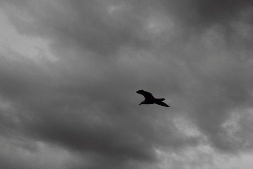 Bird, Sky, Blackandwhite, Clouds, Atmosphere
