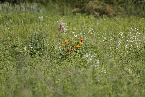 Flower, Blossom, Bloom, Green, Nature