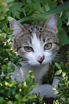 Cat, Cats, Animals, Animal, Kitten, Favorite, Nature