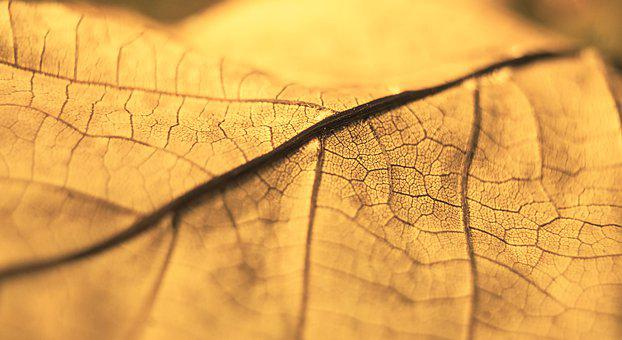 Nature, Plants, Dry, Leaf, Uschnięty, Closeup, Gold