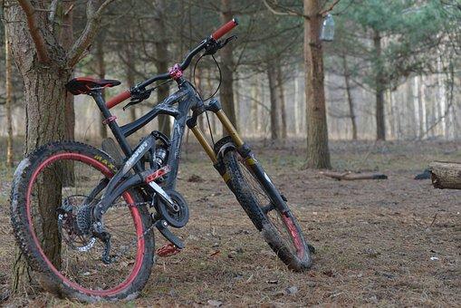 Marin, Bike, Park, Forest, Nature, Pine