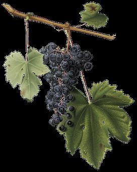 Grape, Leaf, Vines