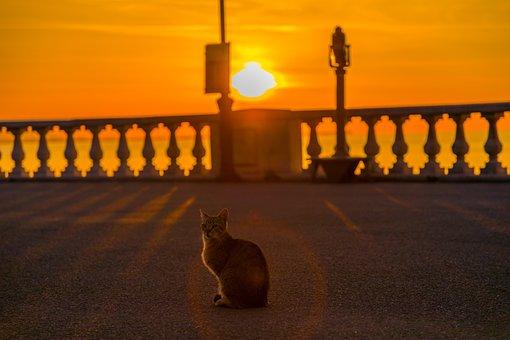 Cat, Sunrise, Sun, Morning, Sky, Landscape, Light