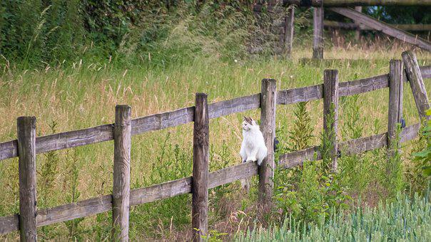 Cat, Fence, Watch, Balance, Sit, Look, Wood, Wood Fence