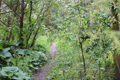 Mountain Trail, Biking Trail, Cycling, Bike, Trail