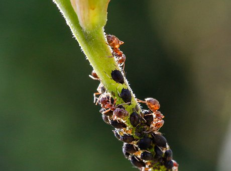 Ants, Aphids, Animals, Palm, Plant, Green, Nature