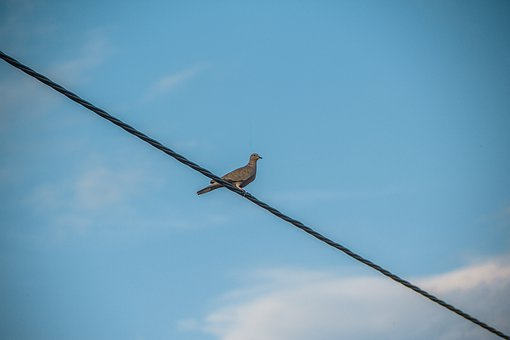 Turtle Dove, Bird, Dove, Nature, Pigeons, Wire