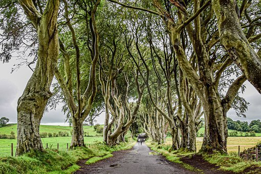 Ireland, Game Of Thrones, Mystical, Forest, Oak, Trees