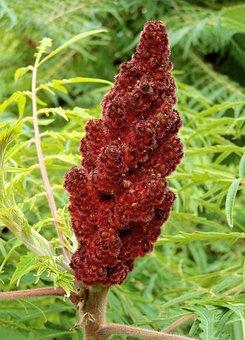 Ecetfa, Vinegar For Poison Ivy