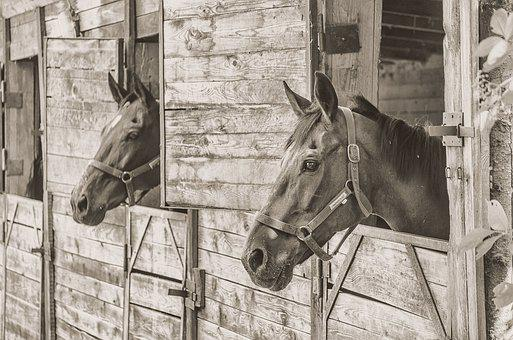 Horse, Animal, Brown Horse, Ungulates, Horse Jaw