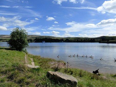 Lake, Dog, Summer, Action, Wildlife, Ducks, Clouds