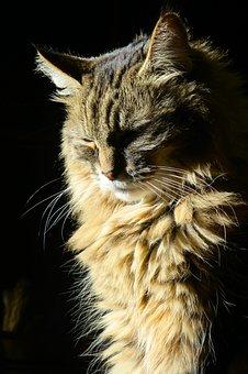 Cat In The Sun, Sunlight, Cat, Feline, Animal, Domestic