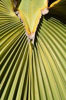Palm Leaf, Subjects, Fan Shaped, Pattern, Background