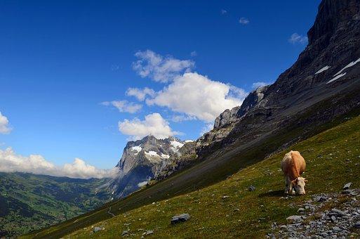 Wetterhorn, Grindelwald, Alpine, Landscape, Rock