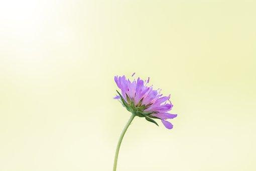 Flower, Purple, Pointed Flower, Purple Flower, Nature