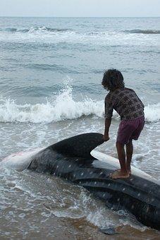 India, Sea, Ocean, Shark, Whale, Cetacean, Child, Beach