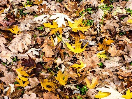 Leaves, Avar, Autumn, Nature, Wood, Foliage