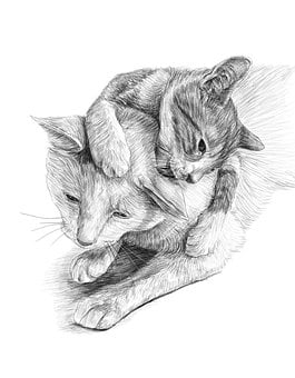 Cats, Artwork, Pencil Drawing, Pet, Cute, Portrait