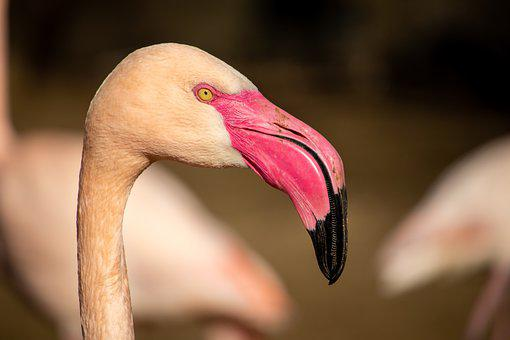 Two, Flamingo, Zoo, Animal, Africa, Nature, Safari