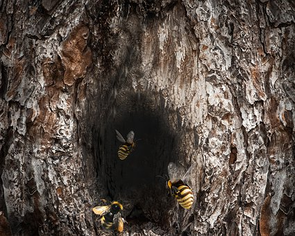Trunk, Wood, Bees, Nature, Texture, Forest, Tree