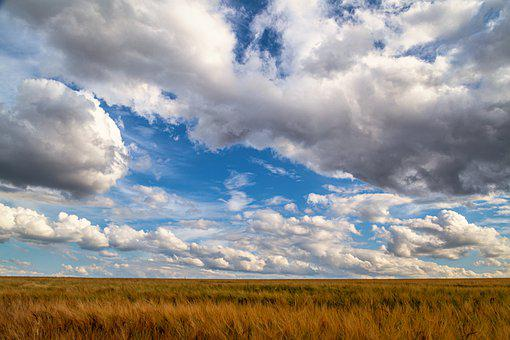 Field, Cornfield, Clouds, Formation, Structure, Pattern