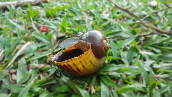Nature, Shell, Grass, Environment, Green
