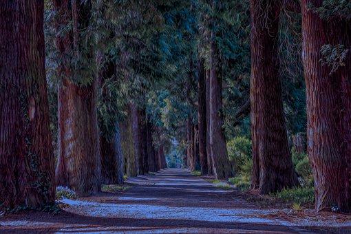Avenue, Trees, Away, Walk, Green, Nature, Park