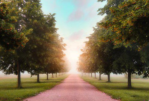 Trees, Avenue, Tree Lined Avenue, Away, Light, Path