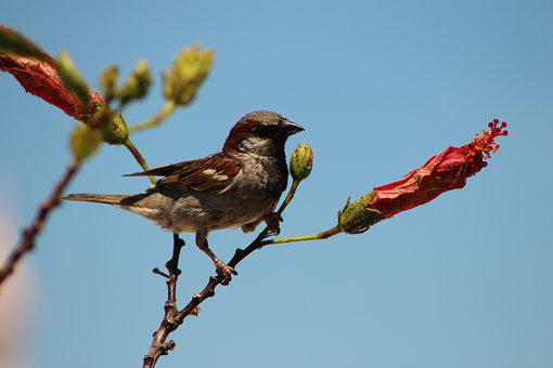 Bird, Nature, Sparrow, Animal, Flowers, Summer, Fly