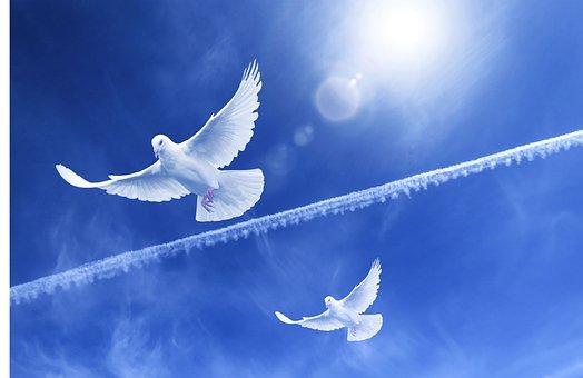 Paloma, Flight, Peace, Freedom, Birds, Wing, Feathers