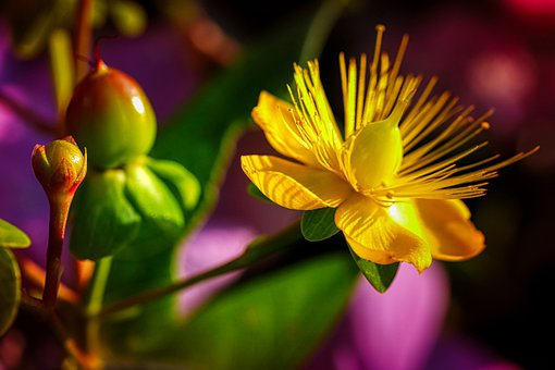 Blossom, Bloom, Yellow, Nature, Bloom, Inflorescence