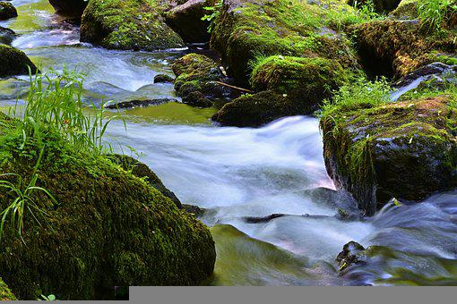 Nature, Creek, Forest, River, Landscape