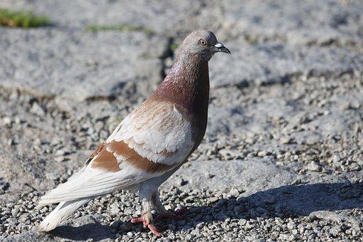Dove, Bird, Animal, Feather, Wing, Animal World, Nature