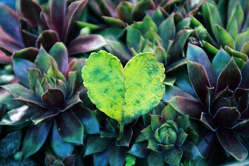 Heart, Leaf, Nature, Forest, Green