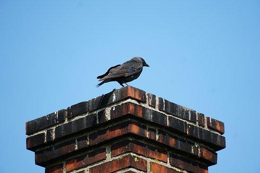 Chimney, Bird, Jack, Expensive, Beak, Black, Sky, Sod