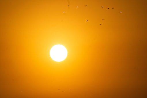 Sunrise, Birds, Morning, Sky, Nature, Landscape, Sun
