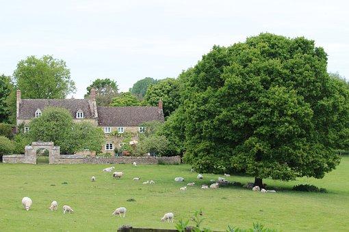Farm, Oak, Parkland, Sheep, Rural, Countryside, Lamb