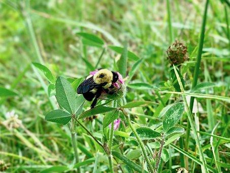 Bee, Spring, Grass, Green Nature, Clover