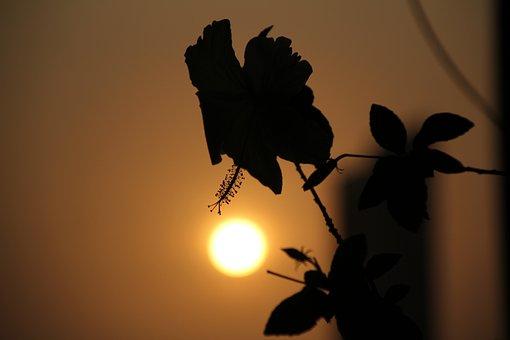 Silhouette, Nature, Sunset, Landscape, Sun, Evening