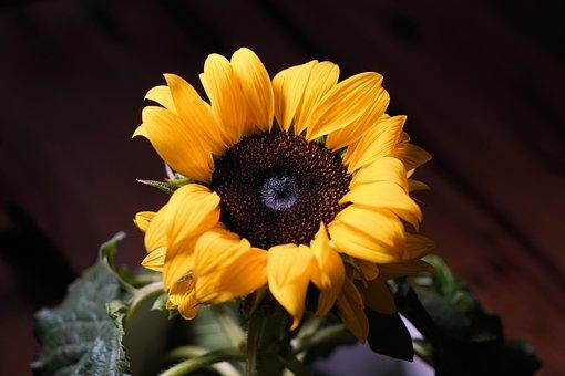 Sunflower, Sun, Flower, Blossom, Bloom, Yellow, Summer