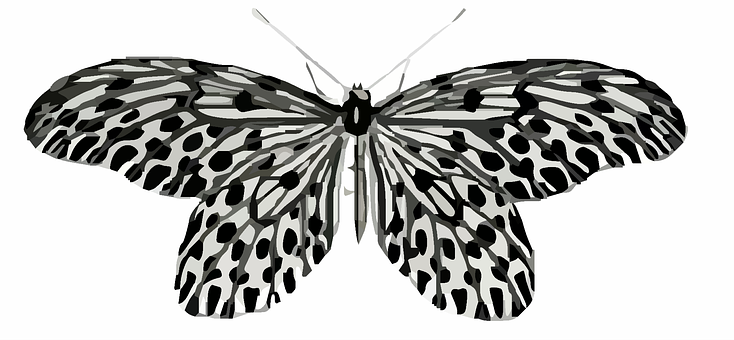 Butterfly, Clip Art, Colorful, Black, White, Nature