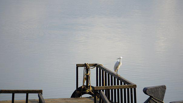 Jetty, Dock, Pier, Bird